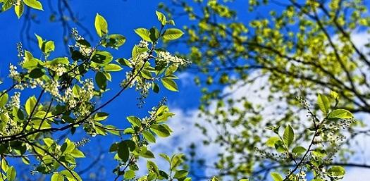 tree-3356034_960_720